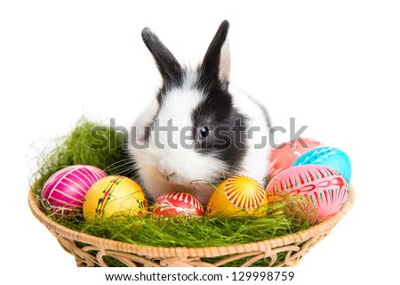 Easter greeting card with easter bunny, grass and eggs in nest, isolated on white background