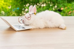 Easter holiday animal, technology e-learning concept. Baby bunny white wearing eye glasses with laptop sleeping on the wood. Lovely baby rabbit lying relax with notebook on bokeh nature background.