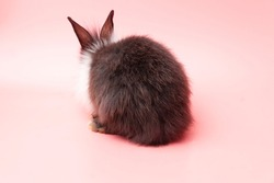 Easter holiday bunny animal concept. Back of black and white furry rabbit sitting over isolated pink background. Cuddly fleecy bunny standing only one.