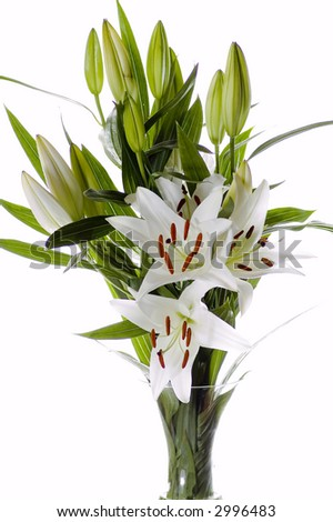 Easter lilies on white background