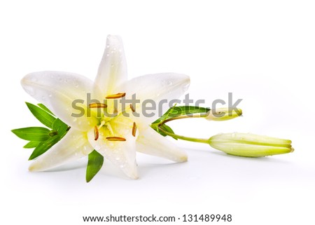 easter lily flower isolated on white background