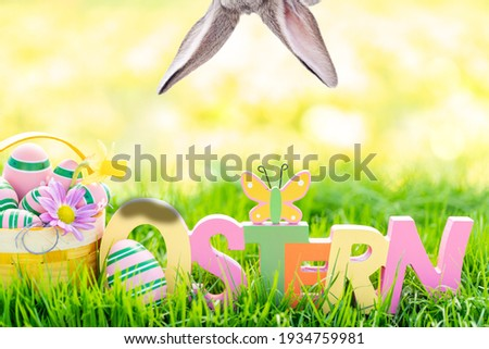Easter postcard german word - ostern - painted on colorful wood with daffodils and green meadow in nature. Easter eggs in basket, colored eggs in spring.  Stock foto ©