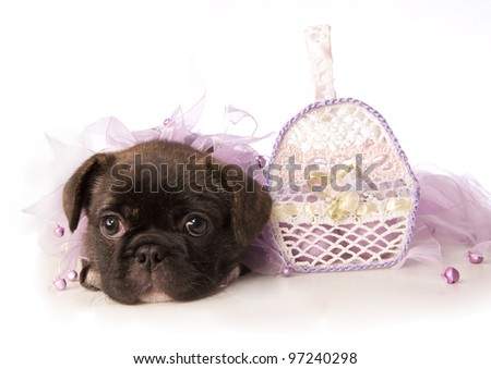 Easter puppy in lavender with basket isolated