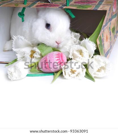 Easter rabbit - stock photo