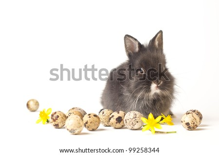Easter rabbit isolated on white background with eggs and flowers