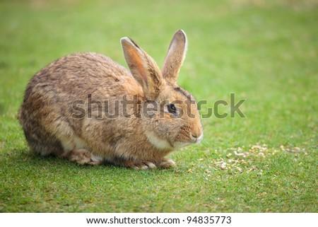 Easter rabbit on fresh green grass