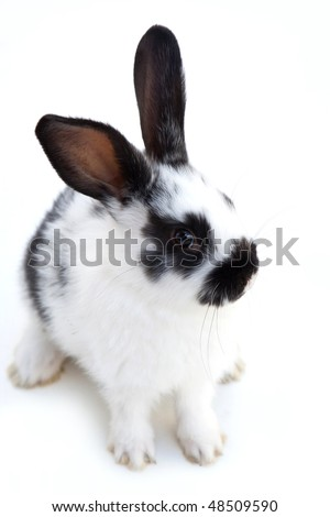 Easter series 33. black and white easter rabbit - stock photo
