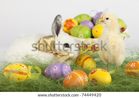 Easter set up with one yellow baby chicken, many painted eggs and one cute white bunny with golden bow on his neck. Focus is on the chick. High resolution image taken in studio.