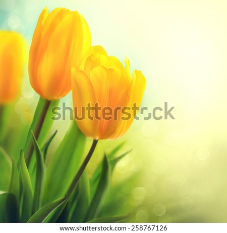 Easter Spring Flowers bunch. Beautiful yellow tulips bouquet. Elegant Mother\'s Day gift over nature green blurred background. Springtime. Growing tulips