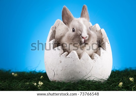 Easter. The bunny