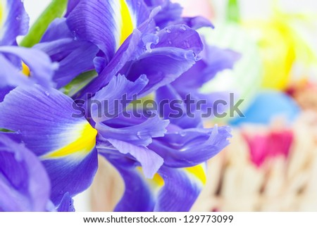 Yellow Background Easter Time Irises On