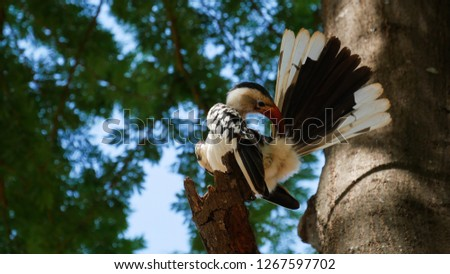 Eastern yellow-billed hornbill on a branch, Safari, Kenya