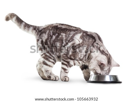 eating cat isolated