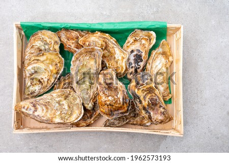 Eating of fresh big raw fine de claires vertes green french oysters from Marennes-Oleron, top view Photo stock ©