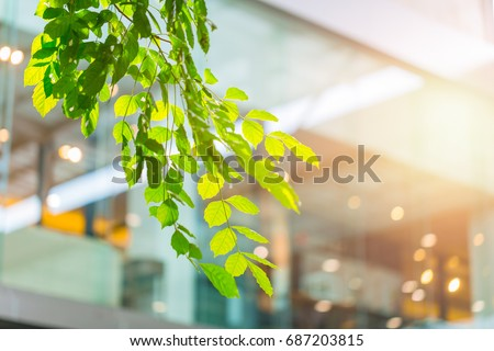 eco building or green office plant tree and garden in city concept. #687203815