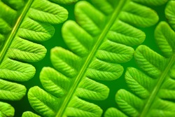 Eco concept. Fern Leaves Ecology Concept. Wildlife Paportik. Green Leaf Fern. Green background for advertising wildlife.