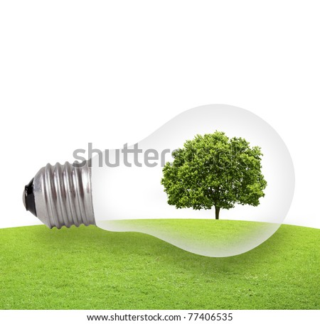 Eco concept, green tree growing in a bulb