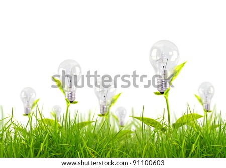 Eco concept - light bulb grow in the grass against white background