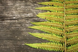 Eco friendly, environmentally friendly, nature background. Horizontal, summer composition with fern leave on a brown, wooden background with place for text
