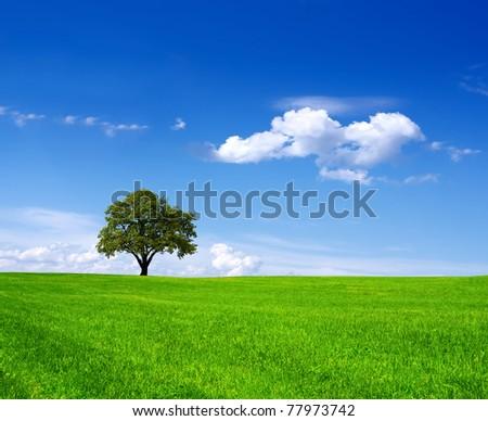 Eco Land #77973742