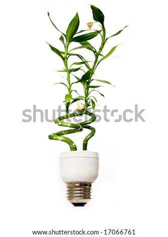Eco light bulb with bamboo