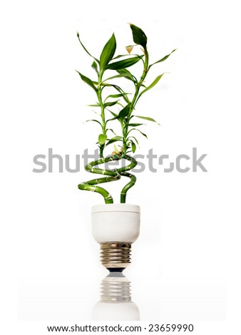 Eco light bulb with bamboo