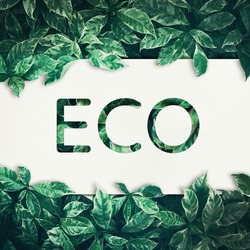 Eco text with green leaf background.friendly,eco environment,concepts ideas