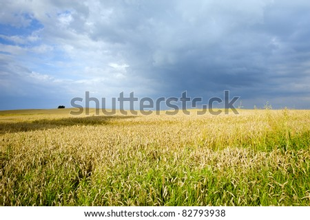 Ecological corn field countryside landscape before storm, Poland, Europe
