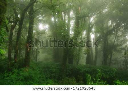 Ecological systems of wetland, swamp and primeval forests with fern moss and orchids