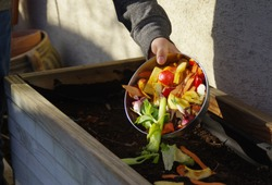 Ecology compost supply - kitchen waste recycling in backyard composter. Environmentally friendly lifestyle. The man throws leftover vegetables from the bowl.