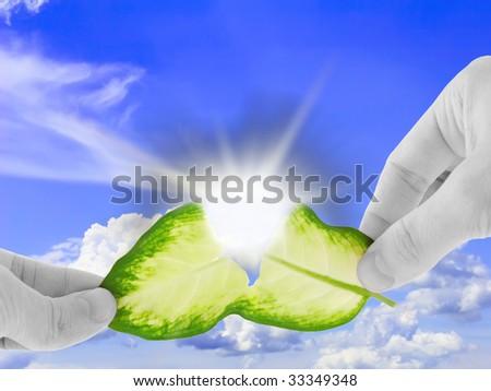 Ecology concept -asunder destroy green leaf in black-white  hand.