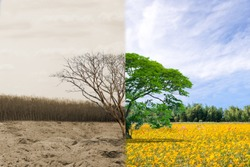 Ecology concept change tree forest drought and forest refreshing