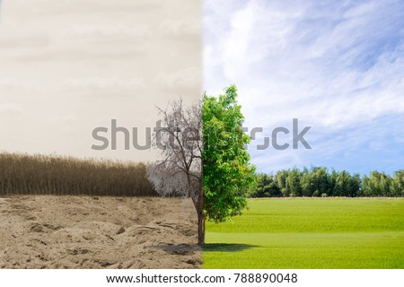 Ecology concept change tree forest drought and forest refreshing #788890048