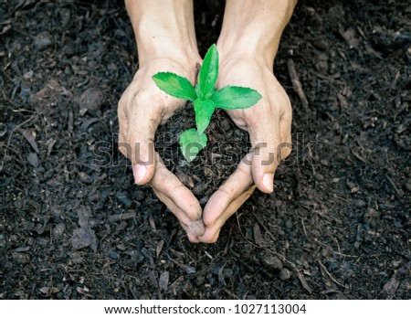 Ecology concept hands holding plant a tree sapling with on ground world environment day #1027113004