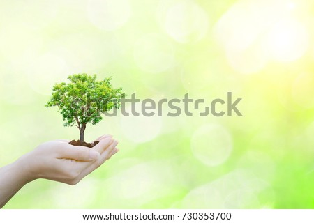 Ecology concept human hands holding big plant tree with on blurred sunset background world environment  #730353700