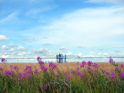 Ecology. Flower ivan tea on the background of a gas well. Summer arctic tundra. Art noise