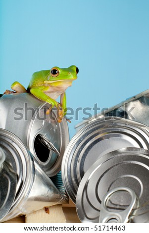 Ecology or environment image of a white-lipped tree frog on garbage