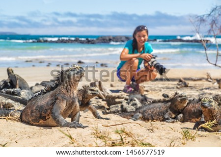 Ecotourism tourist photographer taking wildlife photos on Galapagos Islands of famous marine iguanas. Focus on marine iguana. Woman taking pictures on Isabela island in Puerto Villamil Beach.