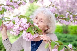 Ederly woman in a pink bloom sakura tree. Spring enjoyment. Spring time. Elderly beautiful woman is enjoying spring. Wrinkled skin of an old woman 70 years old. Beauty and health of the elderly