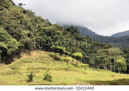 Edge of jungle in Cameron Highlands region of Malaysia. Real rainforest in Southeast Asia.