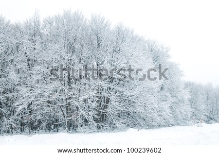 edge of the forest in winter