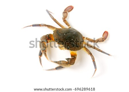 edible alive crab isolated on a white background #696289618