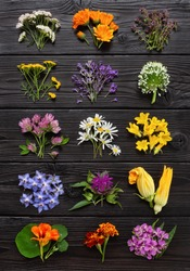 Edible flowers and herbs on a dark wooden board. Big collection of fresh plants for culinary and herbal medicine. Top view.