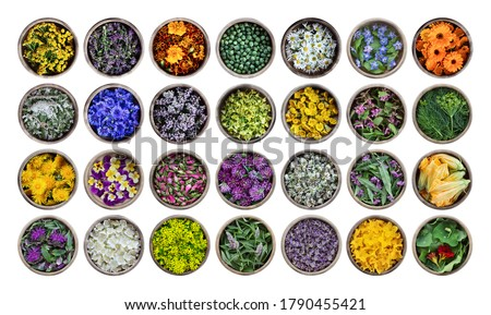 Edible flowers and plants in wooden cups isolated on a white background. Large collection of plants. Concept of edible flowers. Cuisine ingredient, condiment, herbal tea, medical and cosmetology. Stockfoto ©