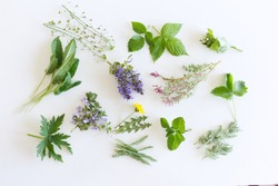 Edible flowers collection isolated on white background. Fresh kitchen herbs .Food concept.Folk medicine.Botanical, natural, herb, and flower concept.