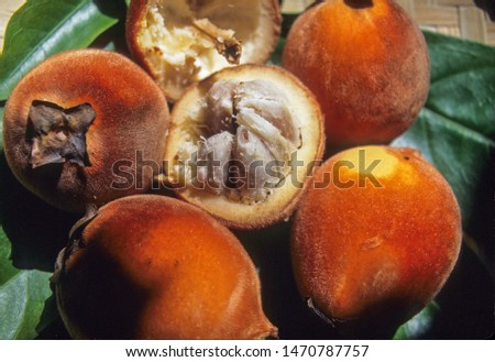 Edible fruits of Philippine Ebony #1470787757