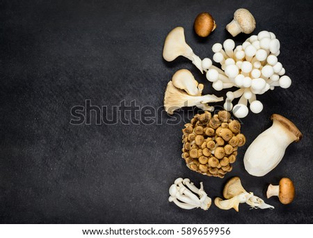 Edible Fungi Mushrooms on Copy Space Text Area with Eryngii, Shimeji and Enoki in Top View