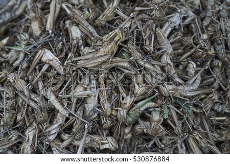 Grasshoppers for sale