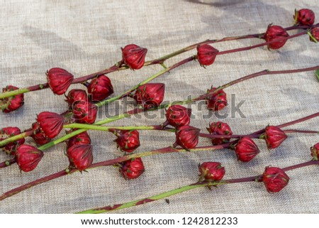 edible hibiscus calyxes for sale at the farmers market sitting on a cloth covered table