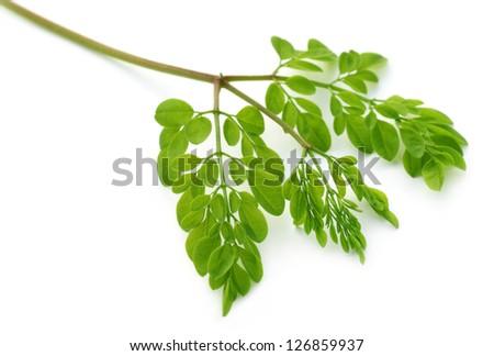 Edible moringa leaves over white background